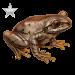 Item natalforestfrog silver 01