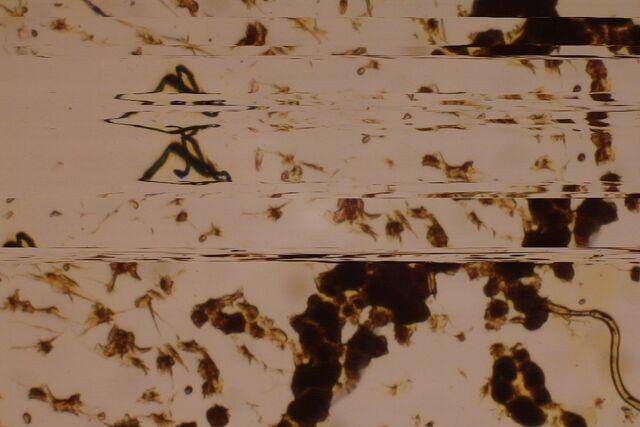 File:SlitScan-Microscope.jpg