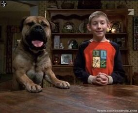 Malcolm in the middle; dewey's dog