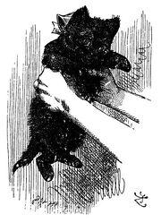 433px-Black kitten