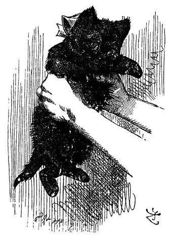 File:433px-Black kitten.jpg