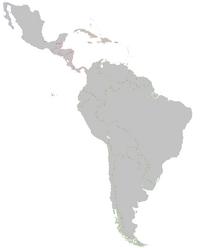 TV-Latin America base map