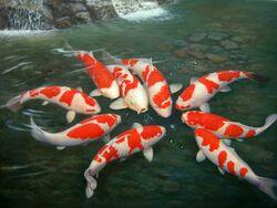 Group-of-koi