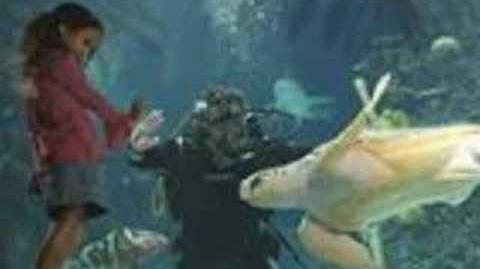 The Newport Aquarium-0