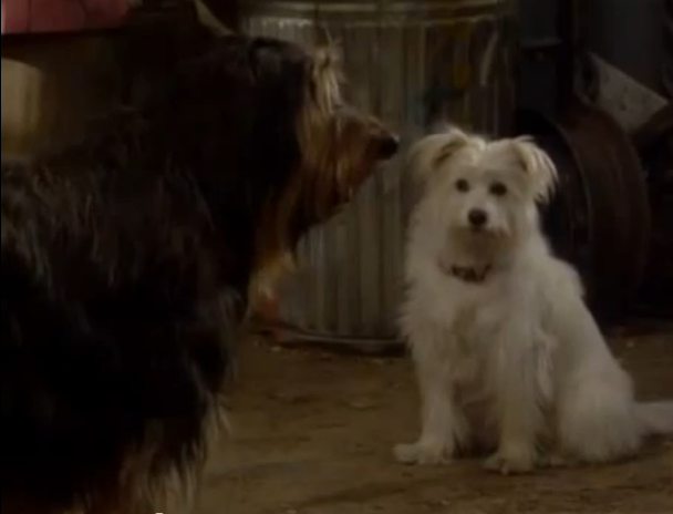File:Buck and female dog.png