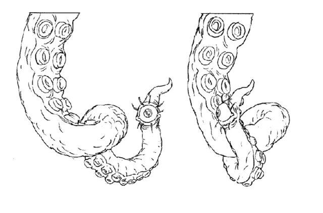 File:Martin Mystery - Pilot Episode - Concept Art (Character Design) by Nicolas Vergnaud - Eyeball Tentacle.jpg