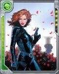 Rose Red Black Widow