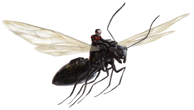 File:Flying Carpenter Ant FH.png