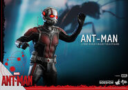 Ant-Man Hot Toys 7