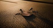 Ant-Man (film) 17