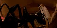 Giant Pet Ant