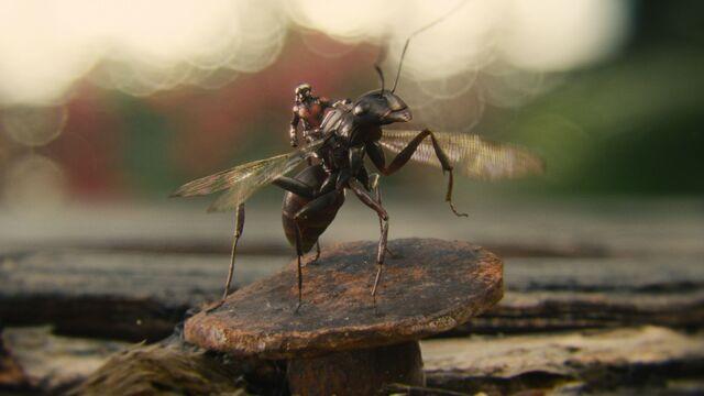 File:Ant-Man and Antony-1.jpg