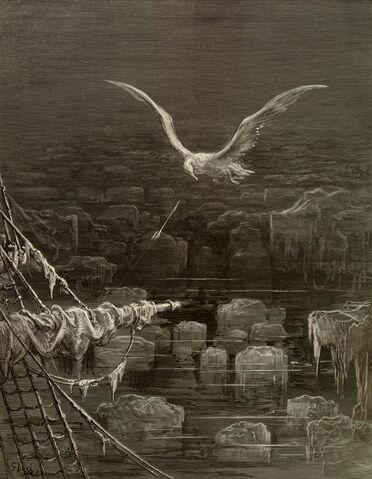 File:Albatross.jpg