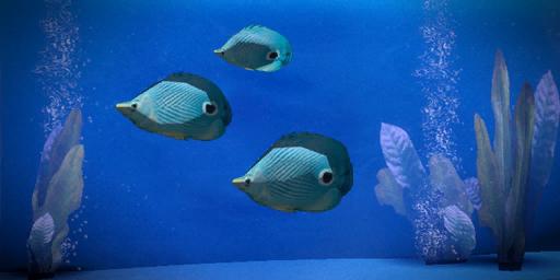File:Prejek Paddle Fish.png