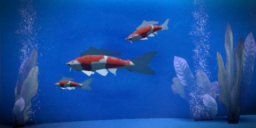 File:Koi fish.png
