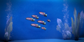 Thessian Sunfish.png