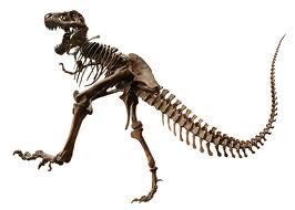 File:Tyrannosaurus Rex Fossil.jpg