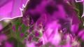 Max Steel Chomp Link(3)