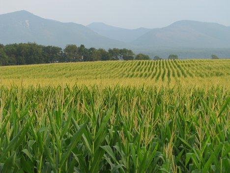 File:Grasslands of the East.jpg