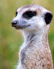 Seacrest Whiskers
