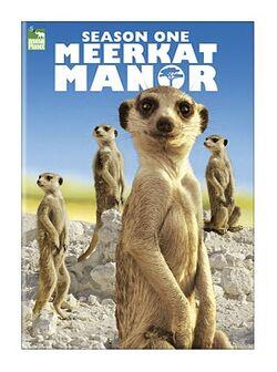 MeerkatManor1