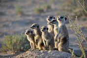 Baobab and pups
