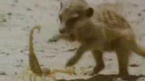 Meerkats United - Part 2