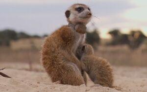 Enili in A Meerkat's Tale