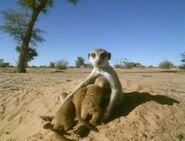 Meerkats United - Babysitting