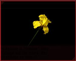 File:P2IS Iris.png