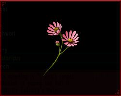 File:Aster Tataricus IS.png