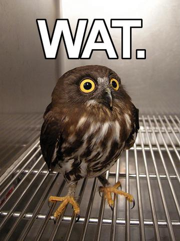 File:Y wat owl.png