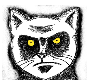 File:Angry-cat-glare.png