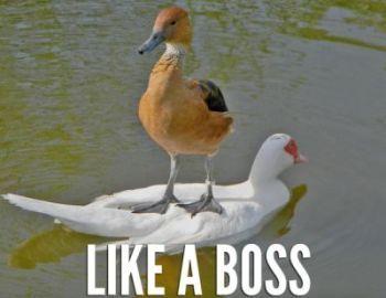 File:Boss.jpg
