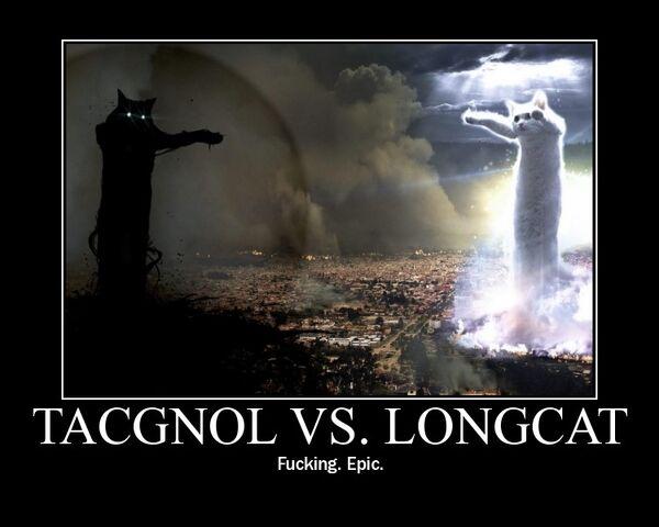 File:TacgnolVSLongcat.jpg