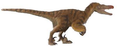 VelociraptorC