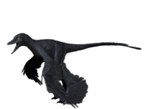 Microraptor colour