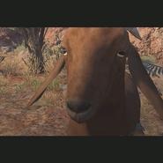 ACC Goat TPP