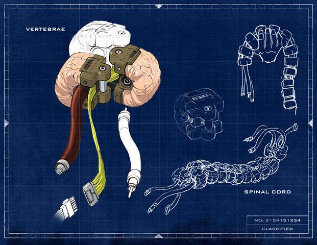 File:Spine.jpg