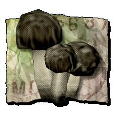 File:Fungus Among Us.png