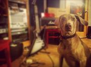 Ernie in studio