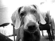 Brendon-s-Dog-Ernie