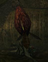 Bloodlower crop