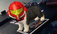 Nintendogs cats