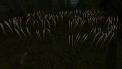 Deep Chozo Ruins Screenshot (1)