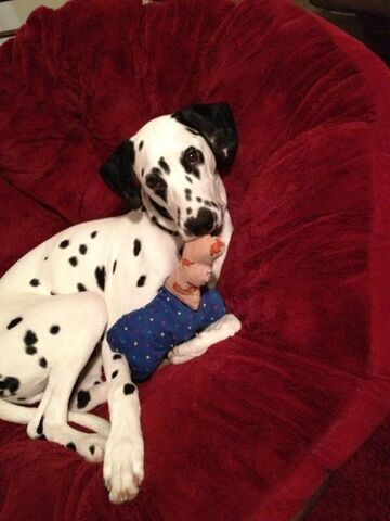 File:Chief with toy.jpg