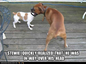 Funny-dog-pictures-over-head