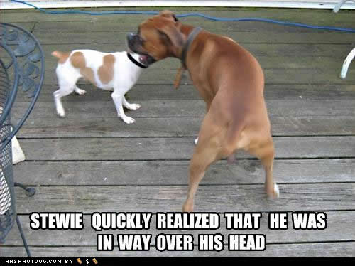 File:Funny-dog-pictures-over-head.jpg