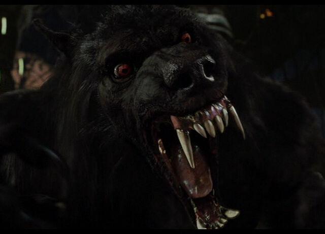 File:WereWolf-werewolf-20646978-800-576.jpg