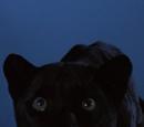 Morris (Panther)